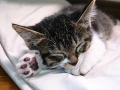 開心傻貓貓